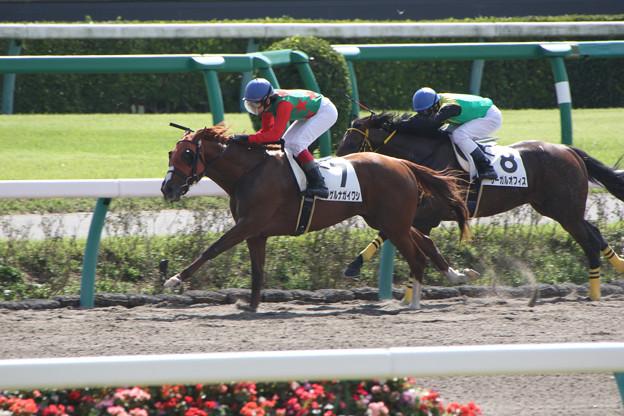 写真: シゲルナガイワシ レース(15/10/03・1R)