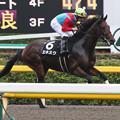 写真: エネスク 返し馬(15/10/17・プラタナス賞)