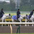 写真: 東京競馬場 誘導馬_4(15/10/17)