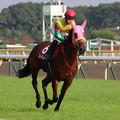 写真: フレイムコード 返し馬(第63回 府中牝馬ステークス)