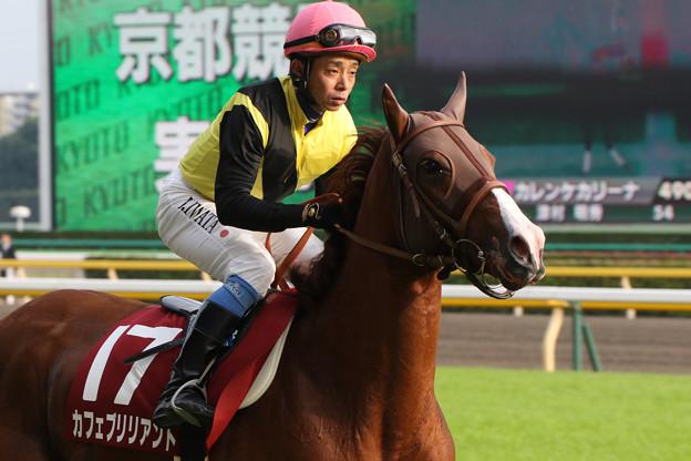 写真: カフェブリリアント 返し馬(第63回 府中牝馬ステークス)