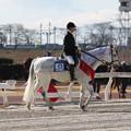 Photos: エクスペルテ_1(15/12/30・笠松競馬場)