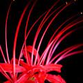 Photos: 紅い火花