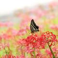 Photos: 残花を求めて