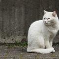 Photos: 猫パンチもらいましたT.T
