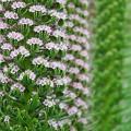 写真: 花の塔