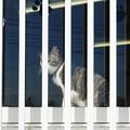 Photos: 囚われの猫
