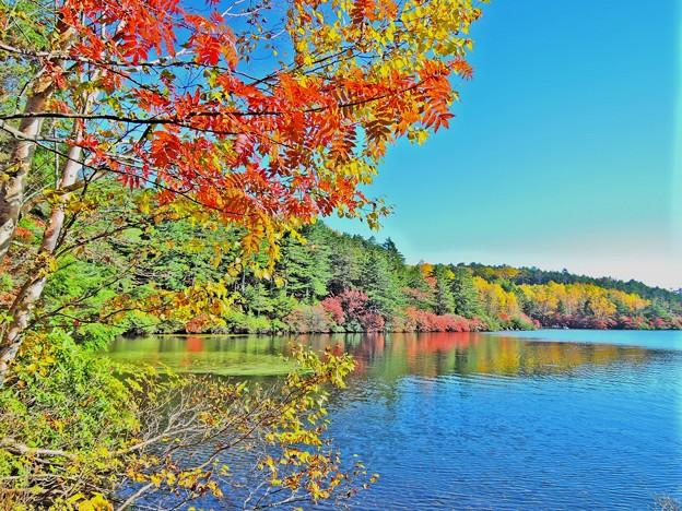 白駒の池の紅葉(HDR)
