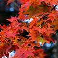 Photos: 秋の軽井沢#4