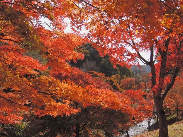もみじ湖の紅葉#1