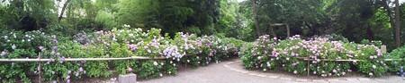 2012-06-28_白鳳庵P (1)