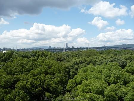 140830-万博記念公園 (22)
