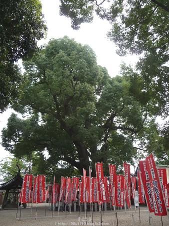 151017-住吉大社 (16)