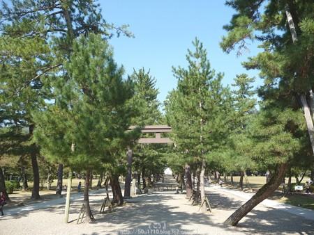 151019-出雲大社 (6)