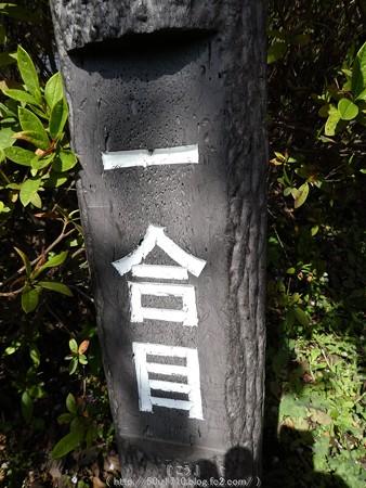 160226-松田町 河津桜 (15)