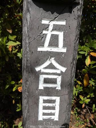 160226-松田町 河津桜 (40)