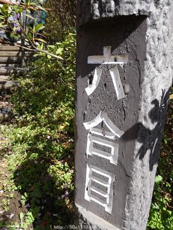 160226-松田町 河津桜 (42)