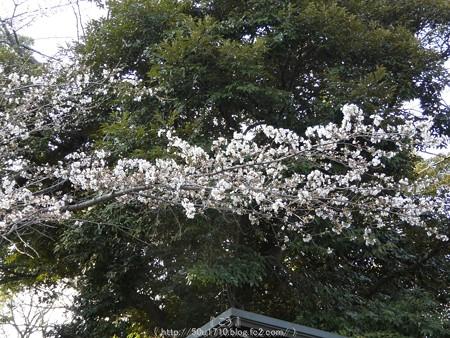 160321-元町公園 (5)