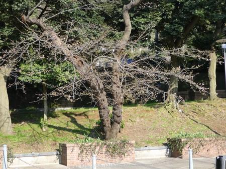 160321-元町公園 (24)