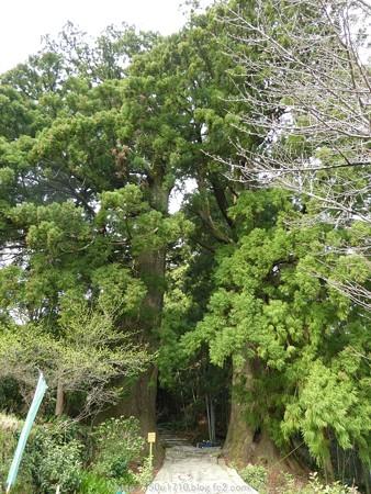 160324-熊野古道 大門坂 (27)