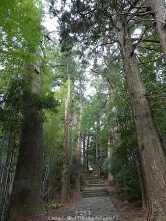 160324-熊野古道 大門坂 (47)