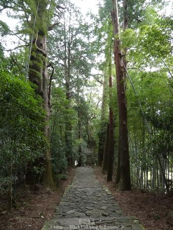 160324-熊野古道 大門坂 (52)