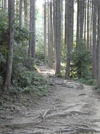 160325-熊野古道 小辺路 (17)
