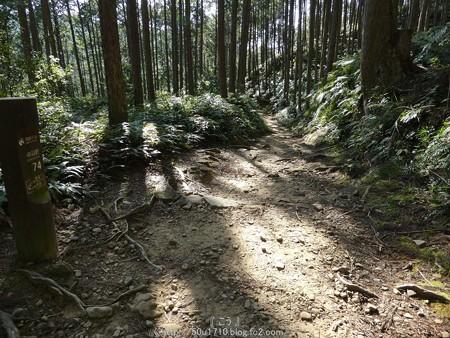 160325-熊野古道 小辺路 (53)