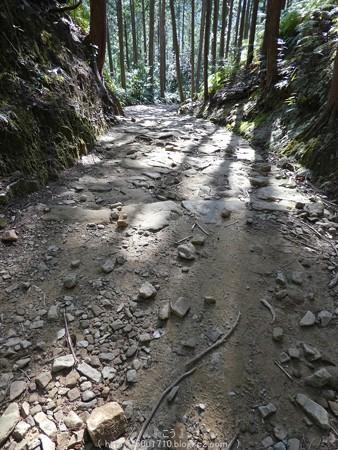 160325-熊野古道 小辺路 (56)