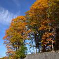 写真: 信州黒姫山麓の紅葉