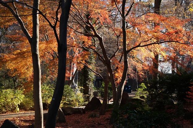 Photos: 井の頭自然文化園の紅葉