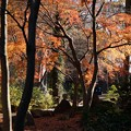 井の頭自然文化園の紅葉