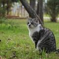 Photos: 遊歩道の猫2