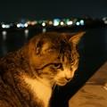 夜の海と猫