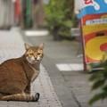 Photos: 路地裏の猫