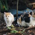 Photos: 似てない親子猫