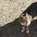 Photos: 三渓園の猫2