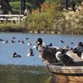 船の上の水鳥達2