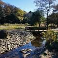 写真: 泉の森3