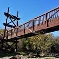 写真: 泉の森の橋