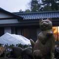 猫寺(御誕生寺)