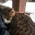 御誕生寺の猫2