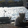 沖島の子猫5