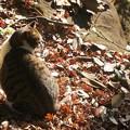 Photos: 落ち葉と猫