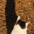 Photos: 黄昏猫