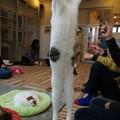 Photos: 猫ジャーンプ!