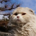 白もふノラ猫
