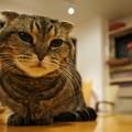 コンパクトにまとまる猫