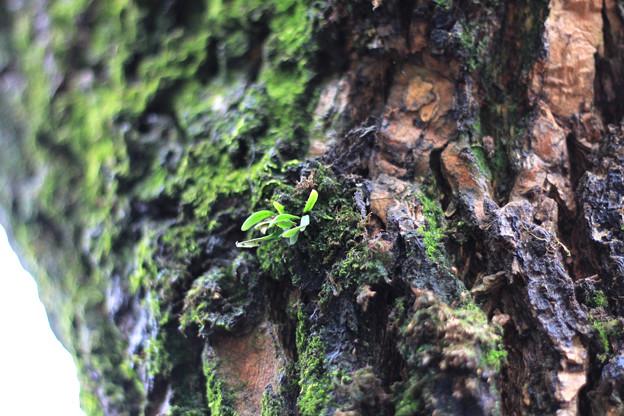 木の表情2_豪徳寺160407