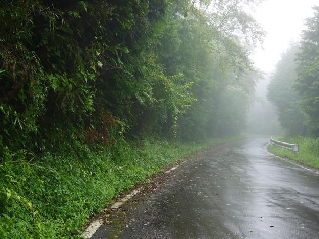 霧の中の裏道にて